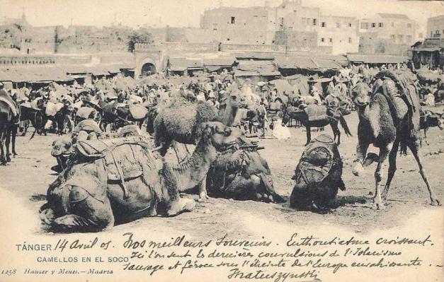Camelos na Porta do Campo